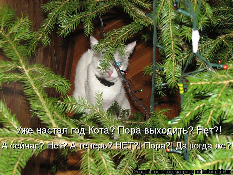 Котоматрица: Уже настал год Кота? Пора выходить? Нет?! А сейчас? Нет? А теперь? НЕТ?! Пора?! Да когда же?!