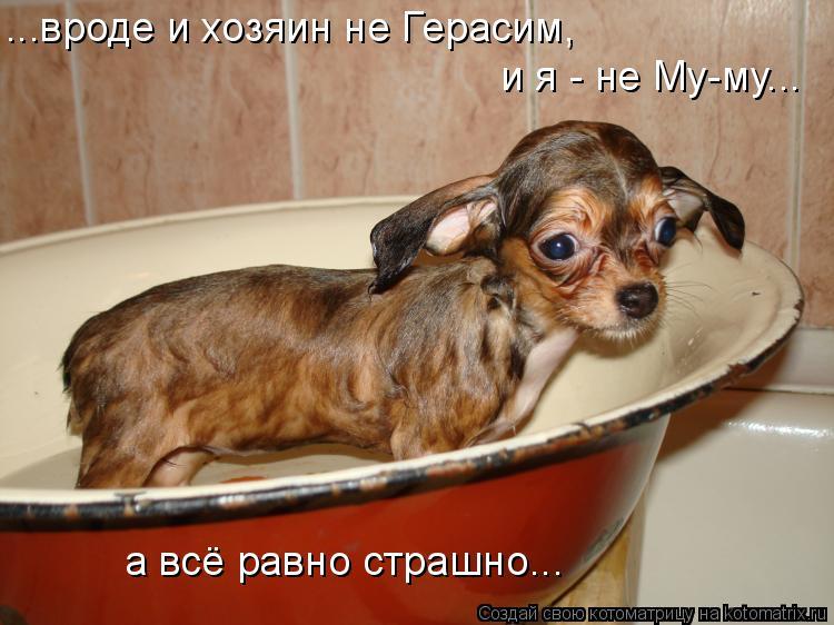 Котоматрица: ...вроде и хозяин не Герасим, и я - не Му-му... а всё равно страшно...