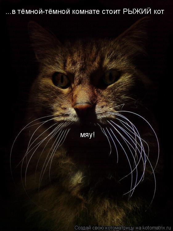 Котоматрица: ...в тёмной-тёмной комнате стоит РЫЖИЙ кот мяу!