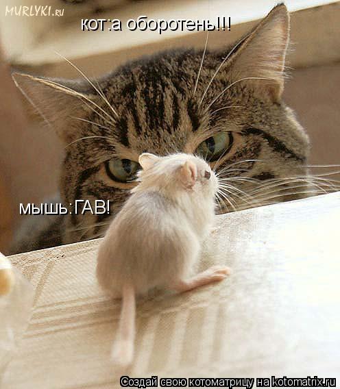 Котоматрица: кот:а оборотень!!! мышь:ГАВ!