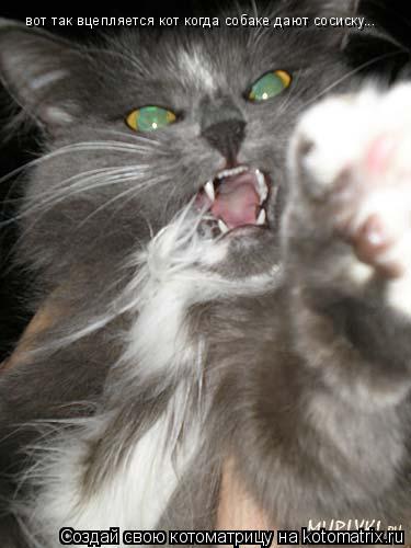 Котоматрица: вот так вцепляется кот когда собаке дают сосиску...