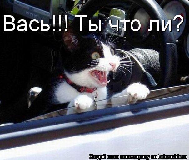 Котоматрица: Вась!!! Ты что ли?