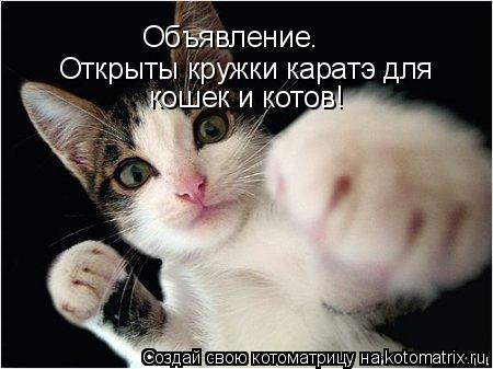 Котоматрица: Объявление. Открыты кружки каратэ для кошек и котов!