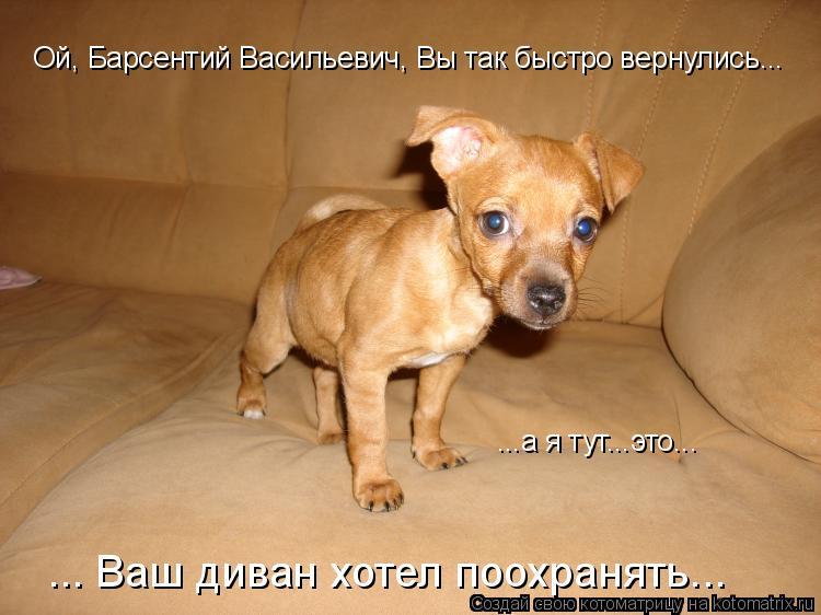 Котоматрица: Ой, Барсентий Васильевич, Вы так быстро вернулись... ... Ваш диван хотел поохранять... ...а я тут...это...