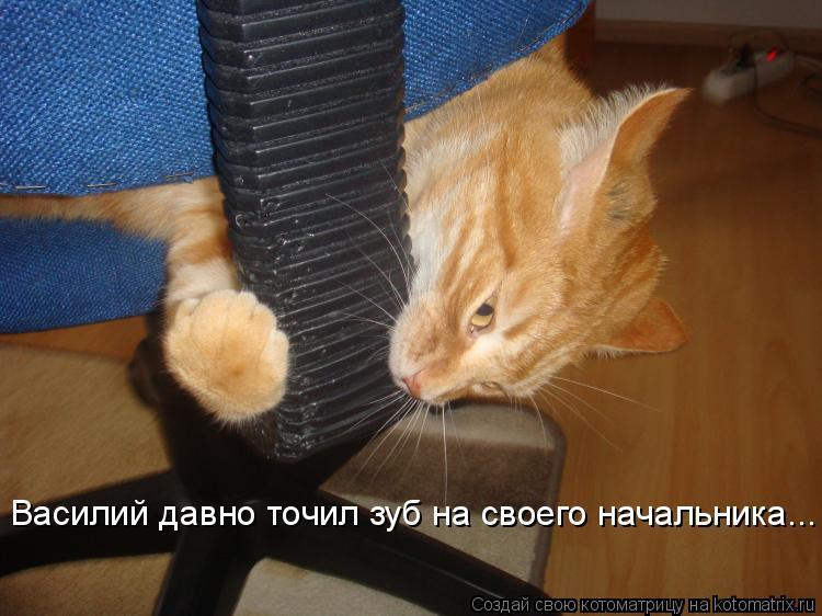 Котоматрица: Василий давно точил зуб на своего начальника...
