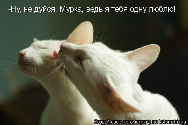 а я одну тебя одну люблю: