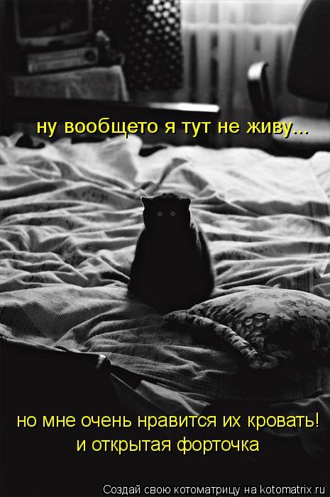 Котоматрица: ну вообщето я тут не живу... но мне очень нравится их кровать! и открытая форточка