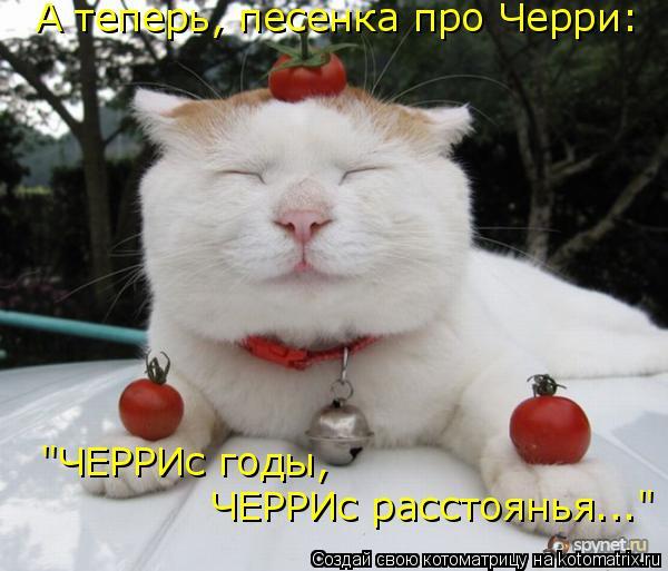 """Котоматрица: А теперь, песенка про Черри: """"ЧЕРРИс годы,  ЧЕРРИс расстоянья..."""""""