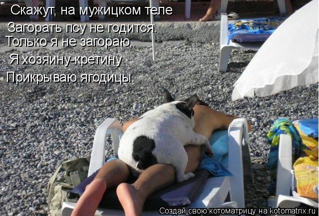 Котоматрица: Скажут, на мужицком теле  Загорать псу не годится. Только я не загораю, Я хозяину-кретину Прикрываю ягодицы.