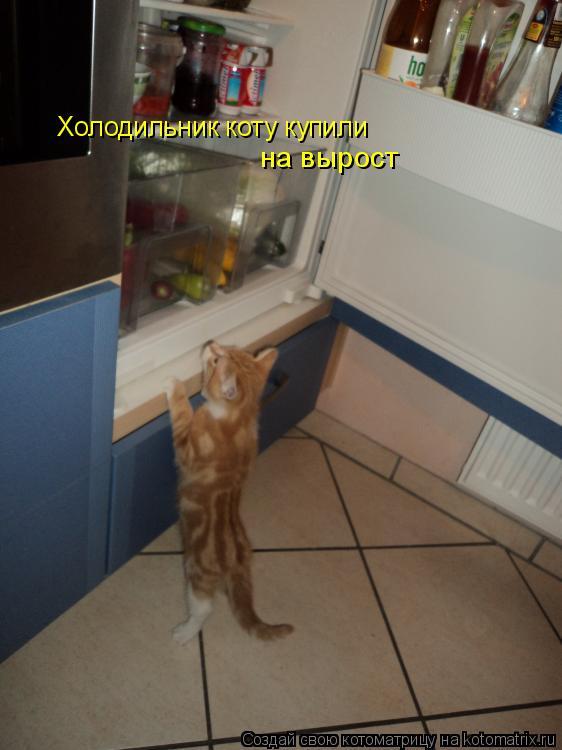 Котоматрица: Холодильник коту купили на вырост