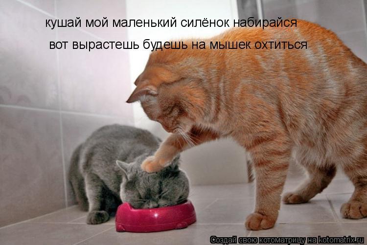 Котоматрица: кушай мой маленький силёнок набирайся вот вырастешь будешь на мышек охтиться