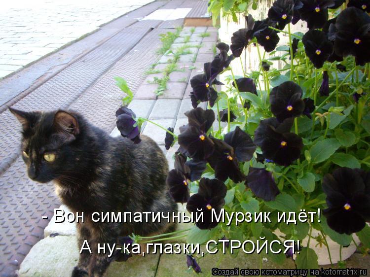 - Вон симпатичный Мурзик идёт! А ну-ка, глазки, СТРОЙСЯ!