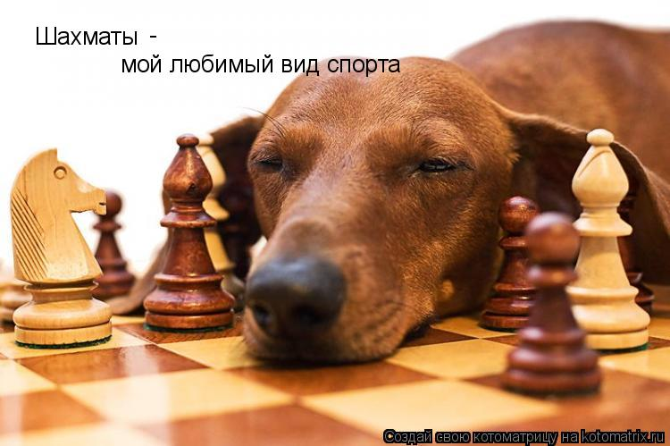 Котоматрица: Шахматы - мой любимый вид спорта