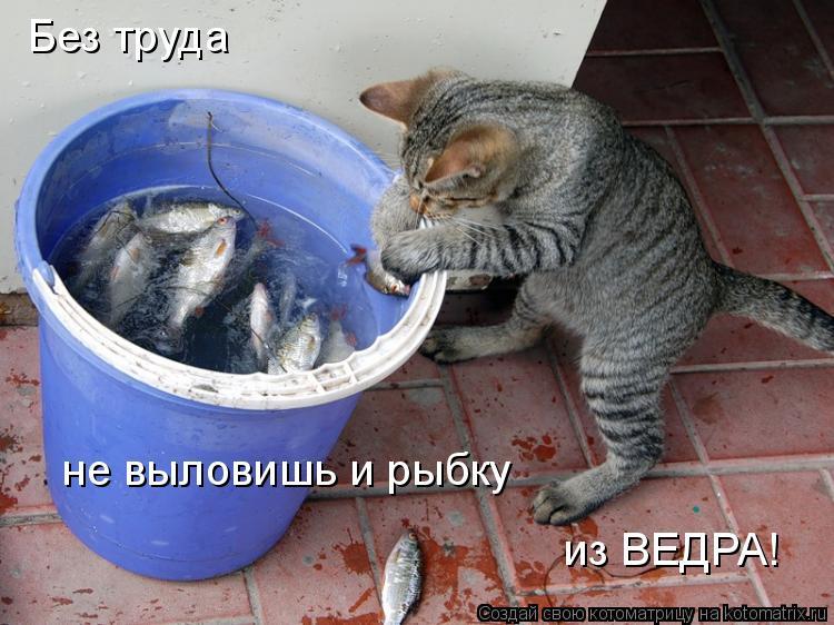 Котоматрица: Без труда  не выловишь и рыбку из ВЕДРА!