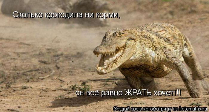 Котоматрица: Сколько крокодила ни корми, он всё равно ЖРАТЬ хочет!!!