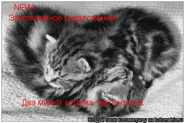 http://kotomatrix.ru/images/lolz/2010/12/14/765509.jpg