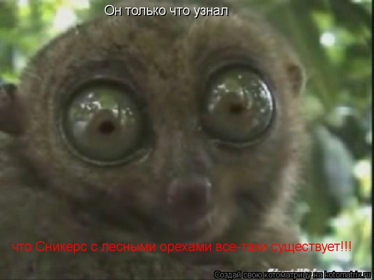 Котоматрица: Он только что узнал что Сникерс с лесными орехами все-таки существует!!!