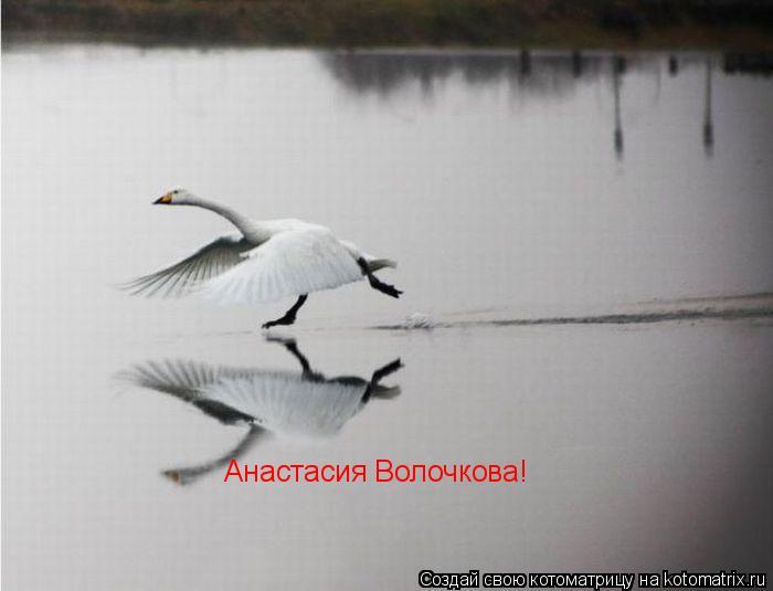 Котоматрица: Анастасия Волочкова!