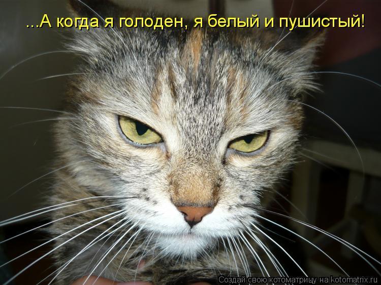 Котоматрица: ...А когда я голоден, я белый и пушистый!