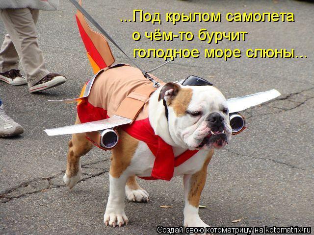 Котоматрица: ...Под крылом самолета о чём-то бурчит голодное море слюны...
