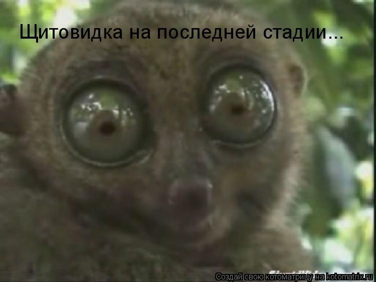 - glass eyes