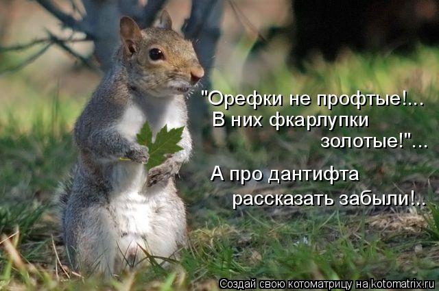 """Котоматрица: """"Орефки не профтые!... В них фкарлупки золотые!""""... А про дантифта рассказать забыли!.."""