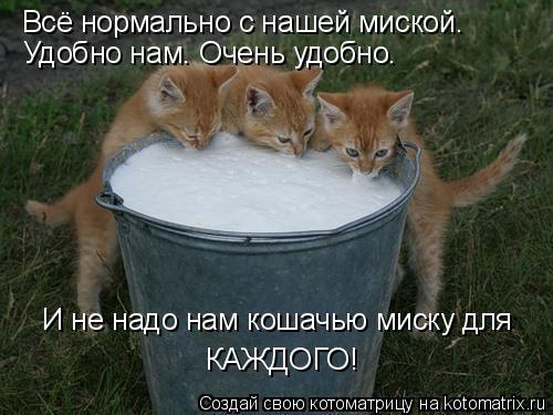 Котоматрица: Всё нормально с нашей миской. Удобно нам. Очень удобно. И не надо нам кошачью миску для  КАЖДОГО!