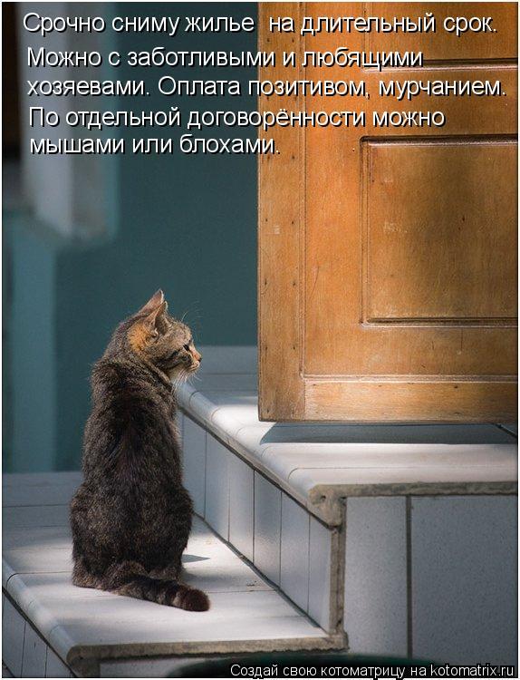 Котоматрица: Можно с заботливыми и любящими  хозяевами. Оплата позитивом, мурчанием. По отдельной договорённости можно  мышами или блохами. Срочно сниму