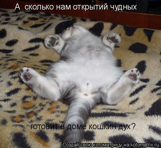 Котоматрица: А  сколько нам открытий чудных готовит в доме кошкин дух?