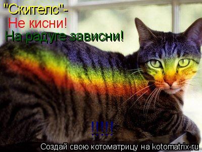 """Котоматрица: """"Скителс""""- Не кисни! На радуге зависни! !!!!!"""