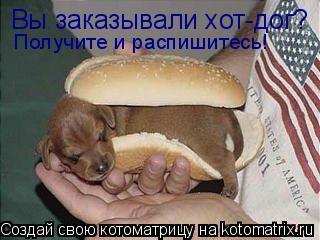 Котоматрица: Вы заказывали хот-дог? Получите и распишитесь!