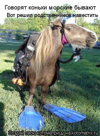 Котоматрица: Говорят коньки морские бывают Вот решил родственниеов навестить