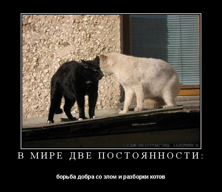 Котоматрица: В мире две постоянности: борьба добра со злом и разборки котов