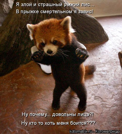 Котоматрица: Я злой и страшный рыжий лис... В прыжке смертельном я завис! Ну почему... довольны лица?! Ну кто то хоть меня боится???