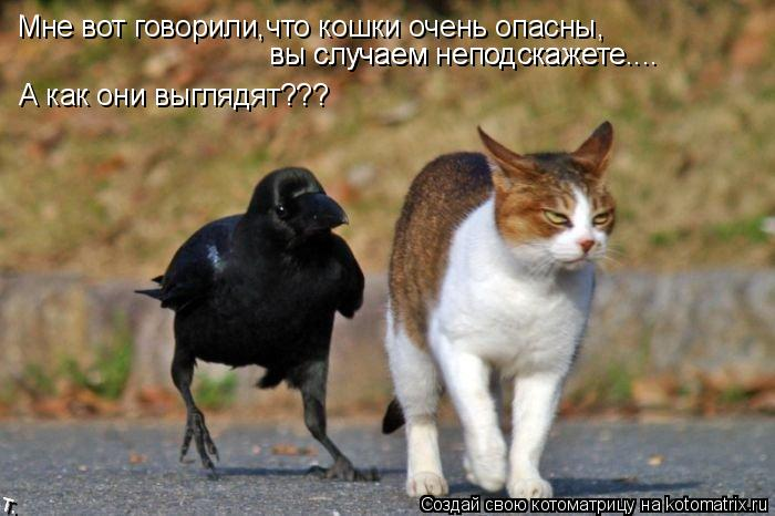Котоматрица: Мне вот говорили,что кошки очень опасны, вы случаем неподскажете.... вы случаем неподскажете.... А как они выглядят???