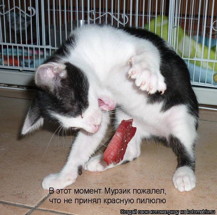 Котоматрица: В этот момент Мурзик пожалел,  что не принял красную пилюлю