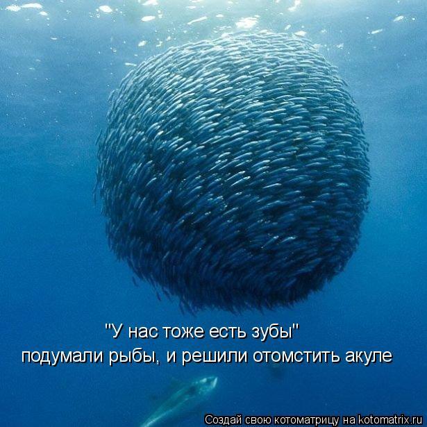 """Котоматрица: """"У нас тоже есть зубы"""" подумали рыбы, и решили отомстить акуле"""