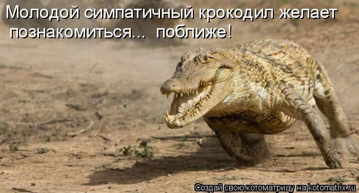 Котоматрица: познакомиться...  поближе! Молодой симпатичный крокодил желает