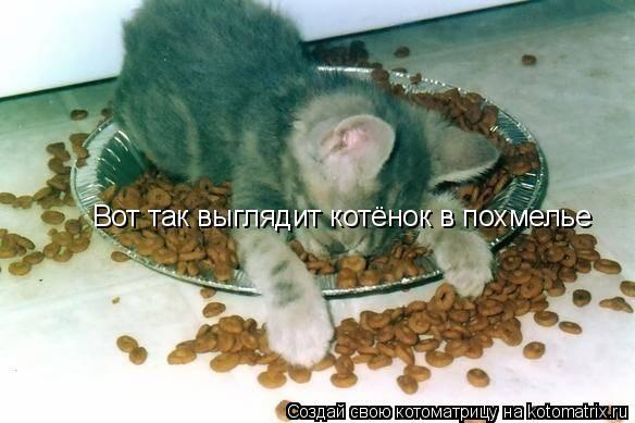 Котоматрица: Вот так выглядит котёнок в похмелье