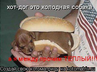 Котоматрица: хот-дог это холодная собака. а я между прочим ТЕПЛЫЙ!!!