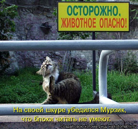 Котоматрица: На своей шкуре убедился Мурзик, что блохи читать не умеют.