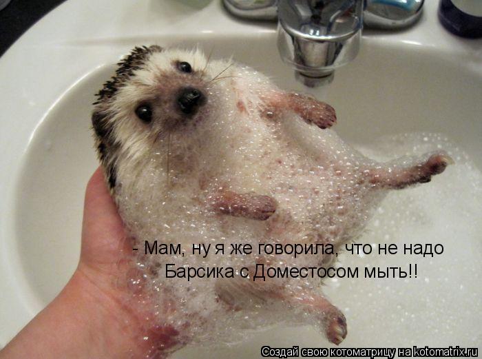 Котоматрица: - Мам, ну я же говорила, что не надо Барсика с Доместосом мыть!!