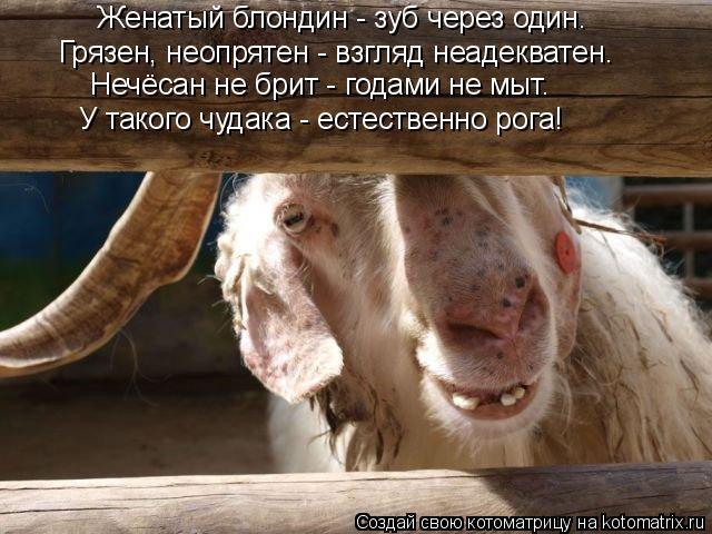 Котоматрица: Женатый блондин - зуб через один. Грязен, неопрятен - взгляд неадекватен. Нечёсан не брит - годами не мыт. У такого чудака - естественно рога!