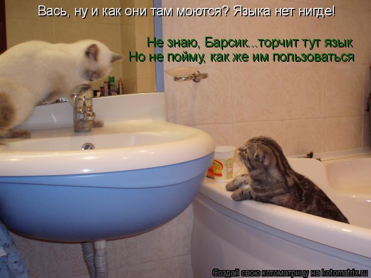 Котоматрица: Вась, ну и как они там моются? Языка нет нигде! Не знаю, Барсик...торчит тут язык Но не пойму, как же им пользоваться