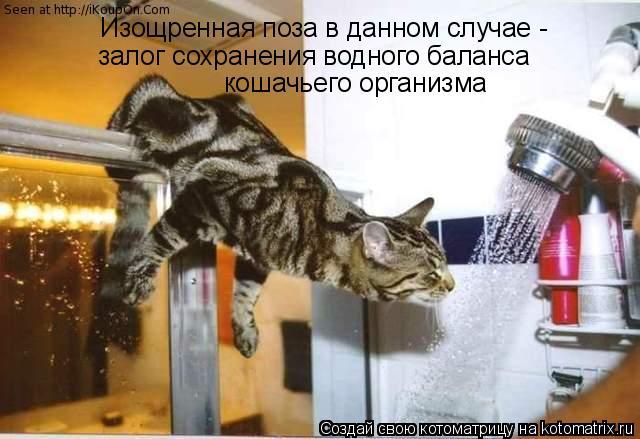 Котоматрица: Изощренная поза в данном случае - залог сохранения водного баланса  кошачьего организма