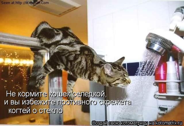 Котоматрица: Не кормите кошек селедкой, и вы избежите противного скрежета когтей о стекло