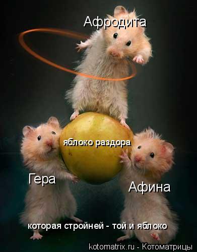 Котоматрица: Гера Афина Афродита яблоко раздора которая стройней - той и яблоко