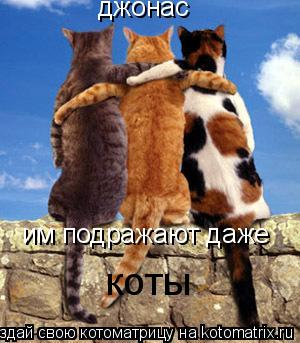 Котоматрица: джонас им подражают даже коты