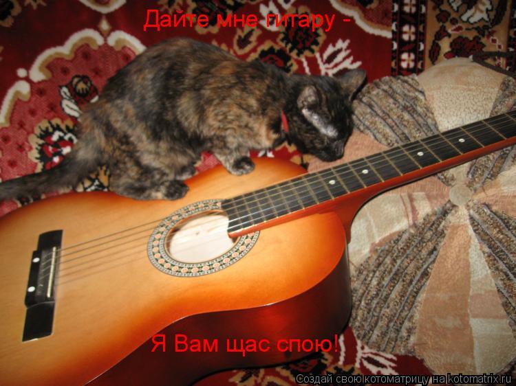 Котоматрица: Дайте мне гитару -  Я Вам щас спою!