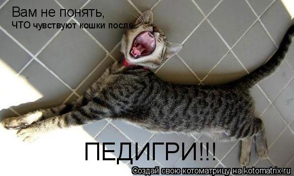 Котоматрица: Вам не понять, ЧТО чувствуют кошки после  ПЕДИГРИ!!!